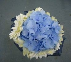 Blue hydrangea with ivory gerbera and navy ribbon collar