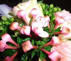 Rose and bouvardia bouquet