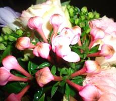 Rose and bouvardia bouquet