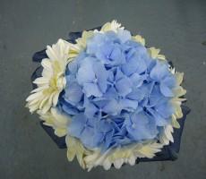 Blue hydrangea with ivory gerbera and navy ribbon collar