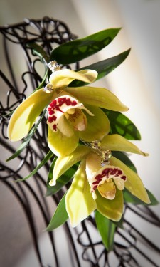 Cymbidium orchid corsage with iridescent crystal