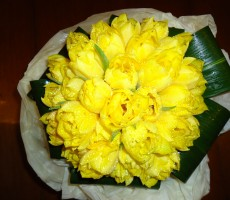Double yellow tulips with aspidistra leaf collar